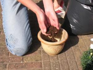 Doe een goede kwaliteit potaarde in een pot