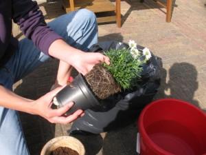 Haal het plastic potje van de plant