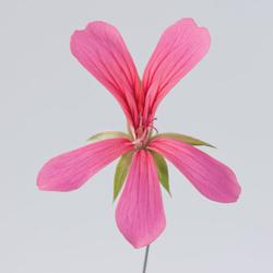 Oostenrijk roze